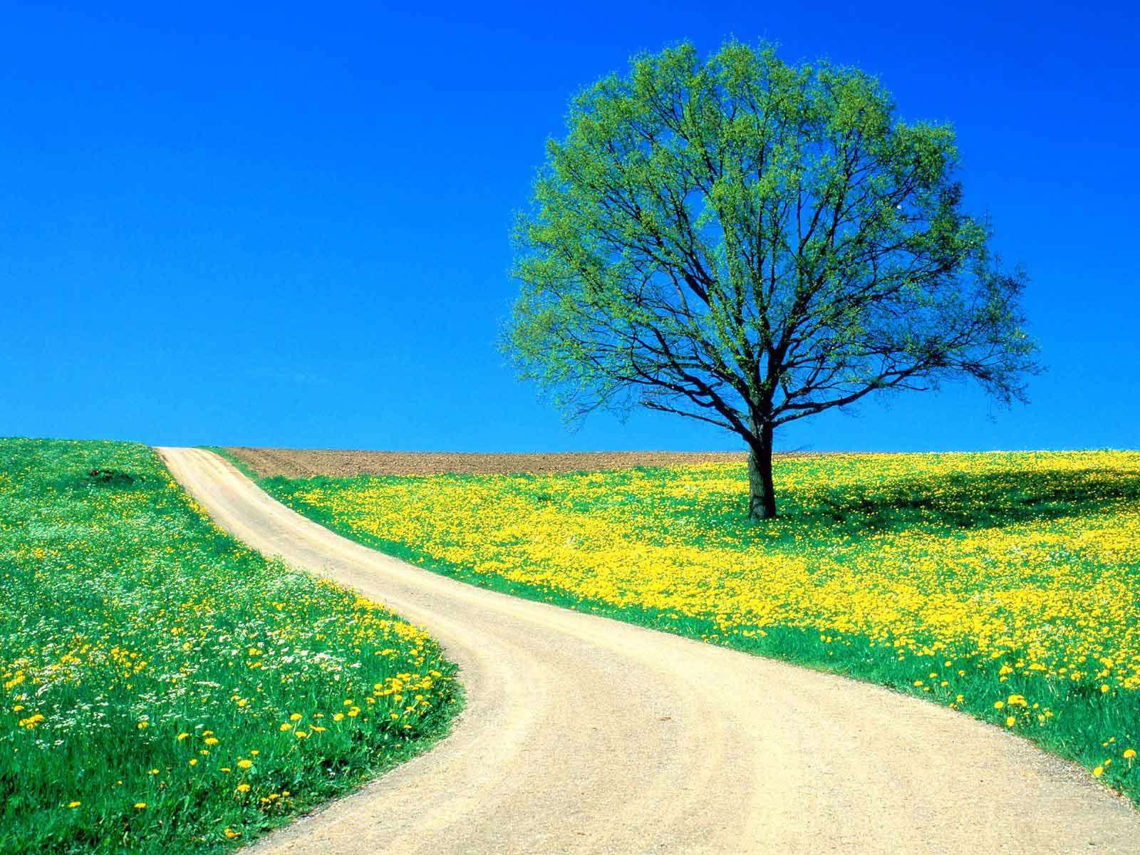 Beautiful Wallpaper Home Screen Summer - spring-road  Pictures_674785.jpg